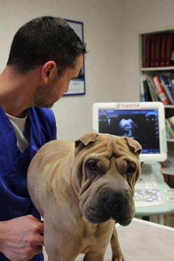 Echographie, clinique vétérinaire des iles