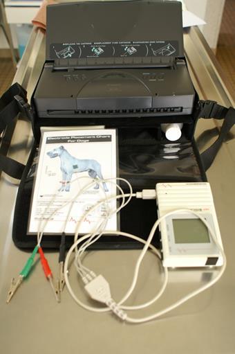 Électrocardiogramme, clinique vétérinaire des iles