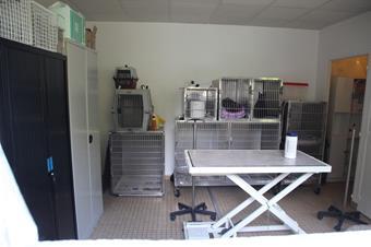 Hospitalisation, clinique vétérinaire des iles