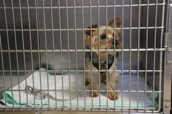 Hospitalisation chien, clinique vétérinaire des iles