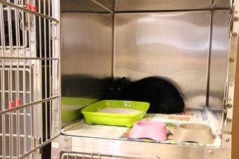 Hospitalisation chat, clinique vétérinaire des iles